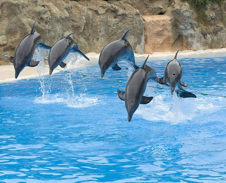 bottlenose: Bottlenose Dolphins leaping over a rope Stock Photo