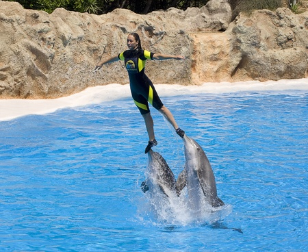 PUERTO DE LA CRUZ, TENERIFE - APRIL 15: Dolphin show in the Loro Parque, which is now Tenerife's second largest attraction with europe's biggest dolphin pool. April 15 2006 Puerto De La Cruz, Tenerife 