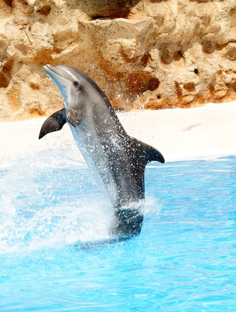 grampus: A bottlenose dolphin performing a tail stand