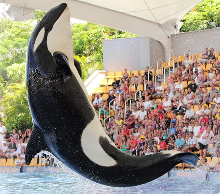 Puerto De La Cruz, Tenerife - September 8, 2011- The new Orca Ocean exhibit has helped the Loro Parque become Tenerife