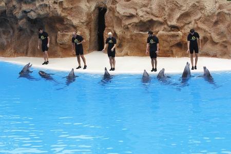 PUERTO DE LA CRUZ, TENERIFE - JULY 4: Dolphin show in the Loro Parque, which is now Tenerife Stock Photo - 14756032