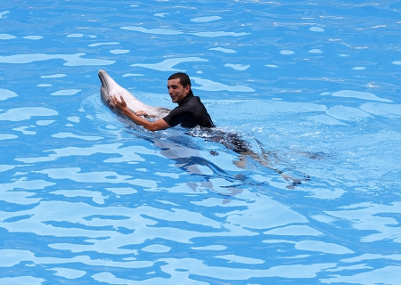 PUERTO DE LA CRUZ, TENERIFE - JULY 4: Dolphin show in the Loro Parque, which is now Tenerife