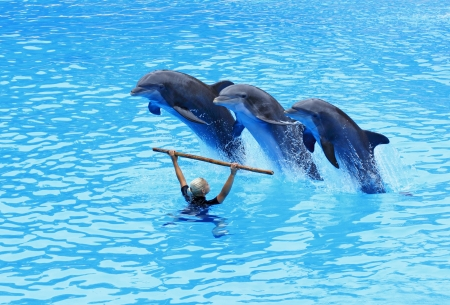 PUERTO DE LA CRUZ, TENERIFE - JULY 4: Dolphin show in the Loro Parque, which is now Tenerife Stock Photo - 14756029