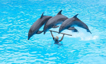 PUERTO DE LA CRUZ, TENERIFE - JULY 4: Dolphin show in the Loro Parque, which is now Tenerife Stock Photo - 14756034