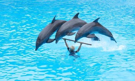 PUERTO DE LA CRUZ, TENERIFE - JULY 4: Dolphin show in the Loro Parque, which is now Tenerife Stock Photo - 14756034
