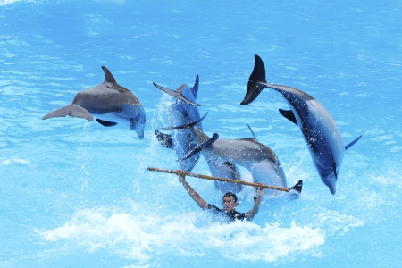 PUERTO DE LA CRUZ, TENERIFE - JULY 4: Dolphin show in the Loro Parque, which is now Tenerife's largest man made attraction with europe's biggest dolphin pool. July 4 2012 Puerto De La Cruz, Tenerife Stock Photo - 14756030