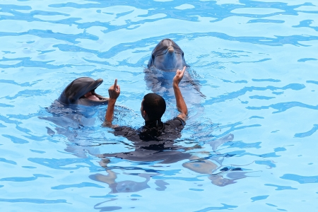 PUERTO DE LA CRUZ, TENERIFE - JULY 4: Dolphin show in the Loro Parque, which is now Tenerife's largest man made attraction with europe's biggest dolphin pool. July 4 2012 Puerto De La Cruz, Tenerife Stock Photo - 14756027