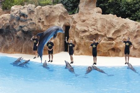 PUERTO DE LA CRUZ, TENERIFE - JULY 4: Dolphin show in the Loro Parque, which is now Tenerife Stock Photo - 14756530