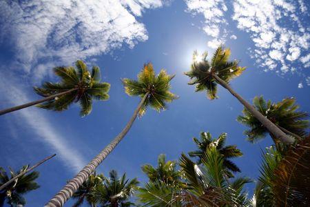 Sunny palms photo