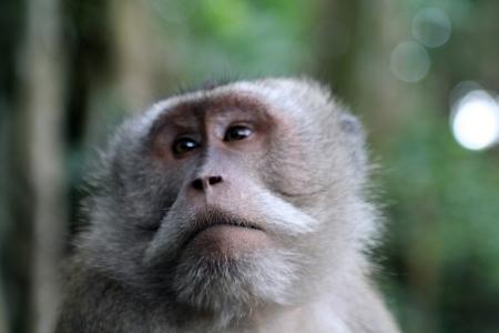 agape: Macaque Stock Photo
