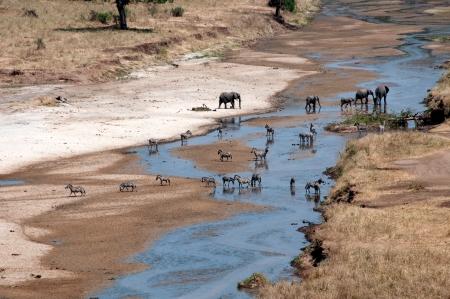 ecotourism: Elephant - Tarangire National Park - Wildlife Reserve in Tanzania, Africa