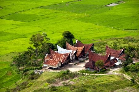 padi: Rice padi with a village