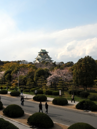 osaka castle: Osaka castle and cherry blossom