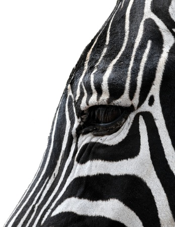 Head of a zebra isolated from the background Stock Photo