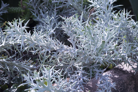 Strange plant