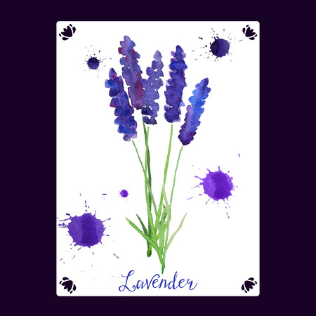 illustration for greeting cards with watercolor lavender. Wedding invitation card.   Colorful theme for your design, prints and illustrations Ilustracja