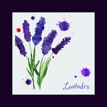 illustration for greeting cards with watercolor lavender. Wedding invitation card.   Colorful theme for your design, prints and illustrations Ilustração