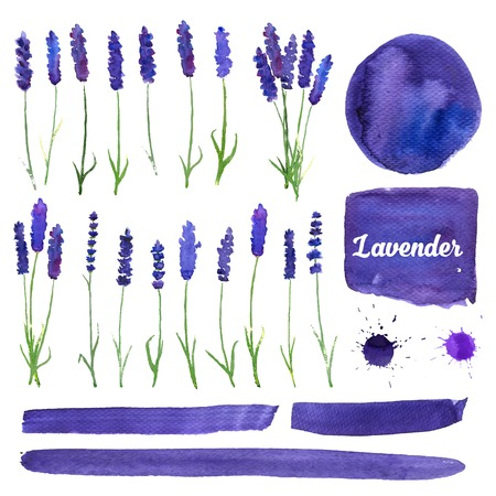 flowers field: illustration for greeting cards with watercolor lavender. Wedding invitation card.   Colorful theme for your design, prints and illustrations Illustration