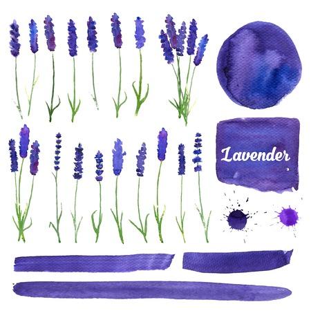 campo de flores: ilustración para tarjetas de felicitación con lavanda acuarela. Tarjeta de invitación de la boda. Tema colorido para su diseño, grabados e ilustraciones Vectores