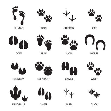 Vector set of footprint of different animals and human.
