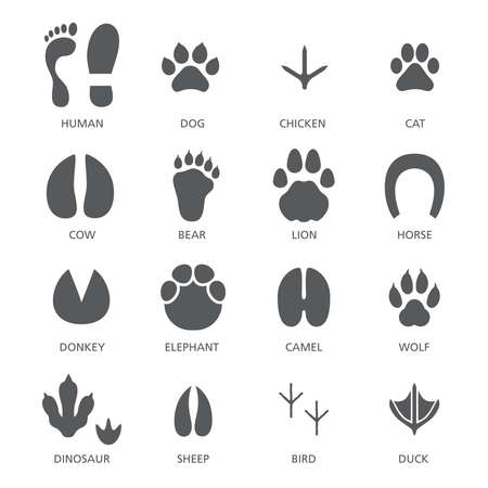 Vector set of footprint of different animals and human Vetores