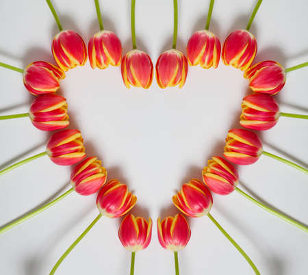 bunch of hearts: Heart of Tulips on White Background