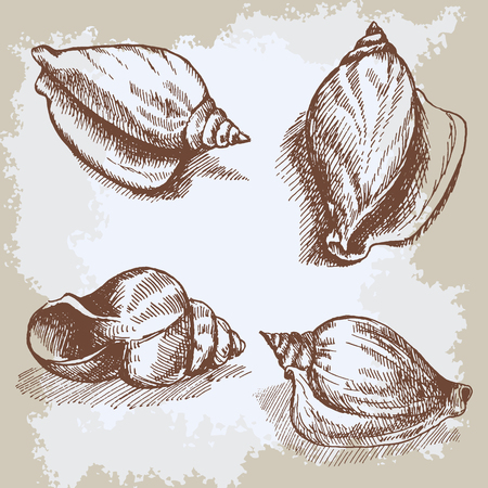 Seashells  graphic vintage etching sketch, underwater artistic marine ornament, design for card, wallpaper, decorative texture, wrapping paper.
