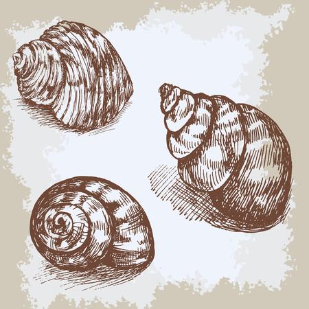 noix saint jacques: Coquillages graphique de croquis cru de gravure, ornement marine artistique sous-marine, la conception de la carte, papier peint, texture décoratif, papier d'emballage.