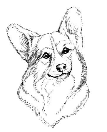 ウェルシュ ・ コーギー ・ ペンブロークのベクトルの手描きスケッチ肖像。白い背景で隔離の手描き国内ペット犬図