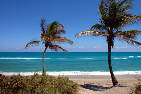 fl: Two palm trees on Jupiter beach in Jupiter FL with waves in the background