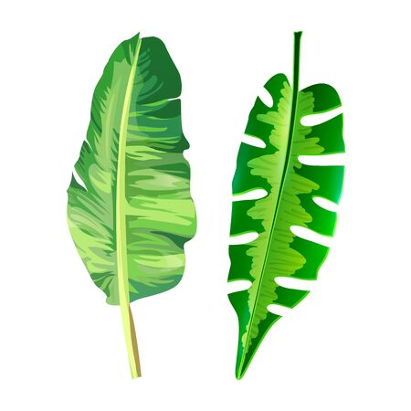 Set of Tropical Leaves Icons isolated on White. Vector Illustration. Print Decorative Design. Realistic Natural Forest Elements for Fashion, Web, Holidays, Travel. Illustration