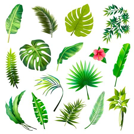 Set of Tropical Leaves Icons isolated on White