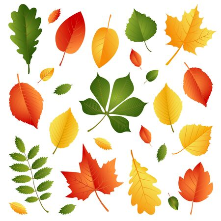 Set of Autumn Leaves Isolated on White Background. Vector Illustration. Flat Style Design. Autumn Decorative Elements for Cards, Invitations, Stickers, Banners, Flyers.