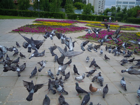 pigeons in the park Фото со стока
