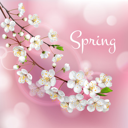 Blossoming tree branches. Spring template