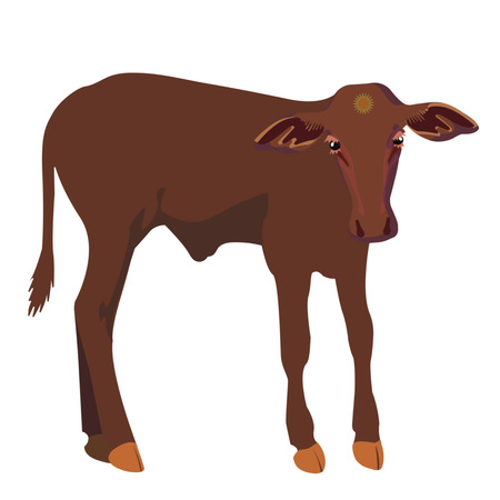 Little calf standing alone. Vector illustration isolate on white background Ilustração