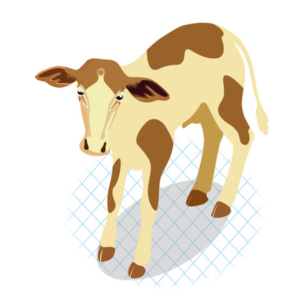 Little calf standing alone. Vector illustration isolated on white background