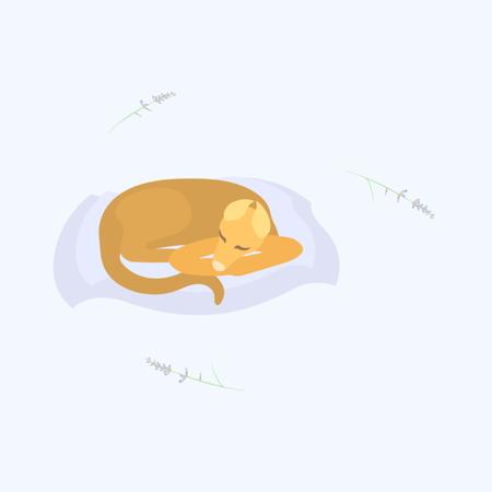 lavander with sleeping dog on the pillow Banco de Imagens