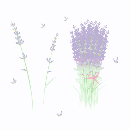 set from dried lavander bouquet and single flowers