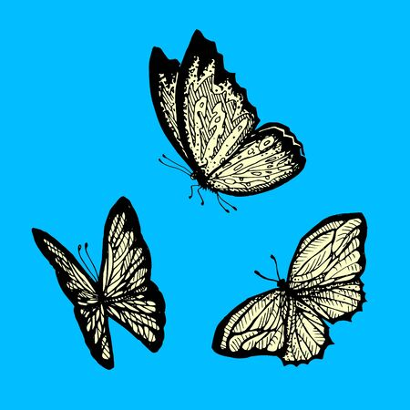 Flying butterfly on a blue background. Illustration