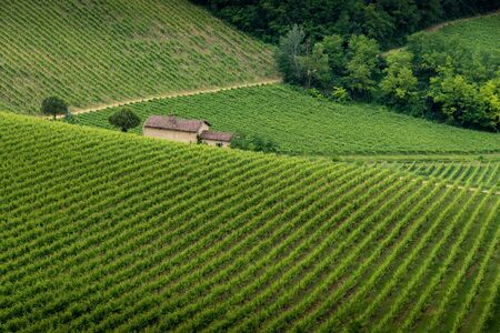 Typical vineyard fields over hills in Oltrepo Pavese in Lombardy Banque d'images