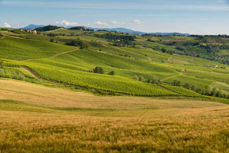Oltrepo Pavese landscape hills with wineyardsand Montalto castle in a sunny day