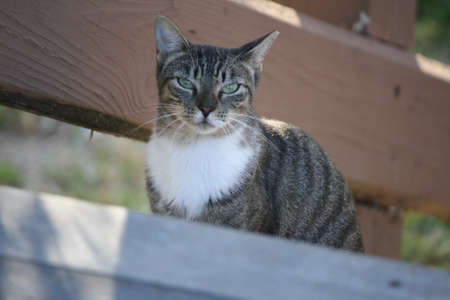 feral: Feral cat on the boardwalk. Stock Photo