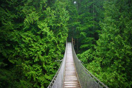 Suspension Bridge 写真素材