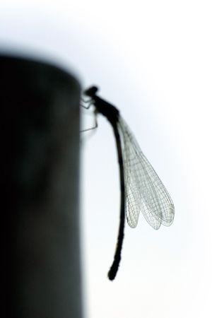 poll: Beautiful sunset on the beach in the DominicanLarge dragonfly silhouetted sitting on a pole Stock Photo
