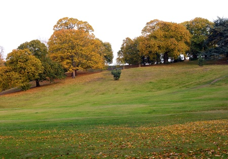 openspace: autumn colours in greenwich park.