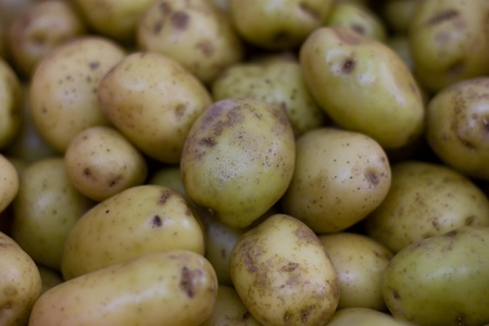 new potatoes Stock Photo - 13051735