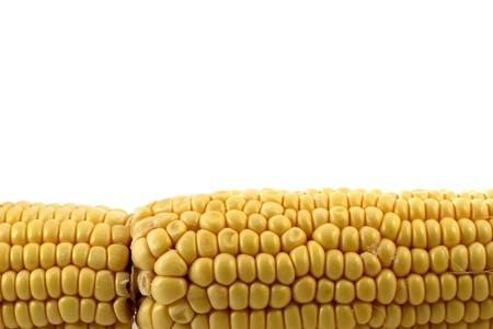corn isolated on white Stock Photo - 13273528