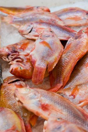 Pargo rojo en una pescadería Foto de archivo - 31176437