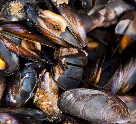 mussle: mussles